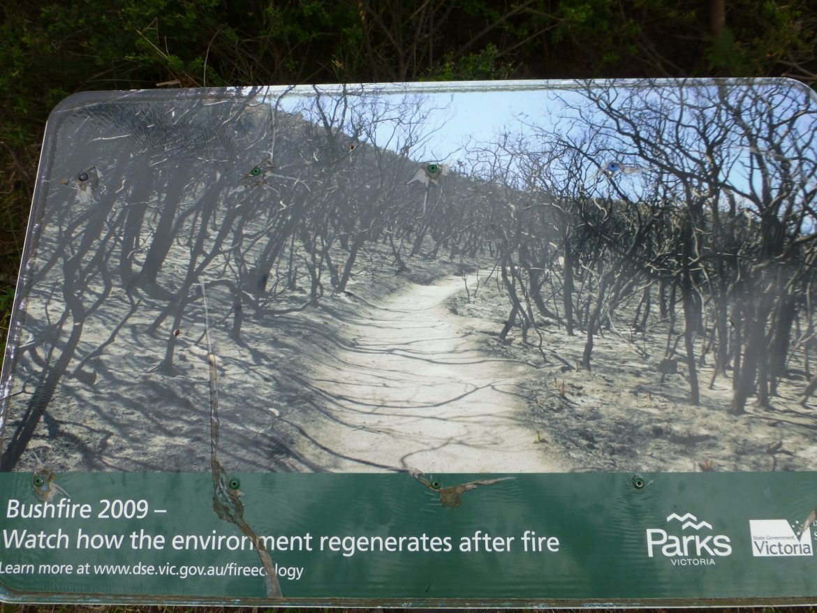 Lilly Pilly Gully in Wilsons Promontory direct na een grote brand