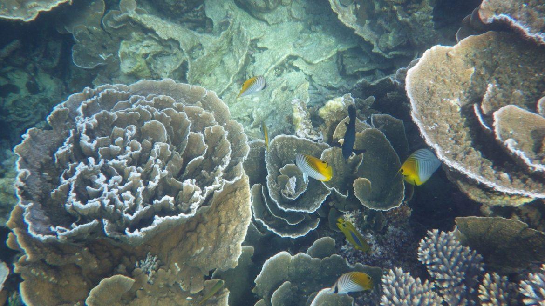 koraal Ningaloo Reef