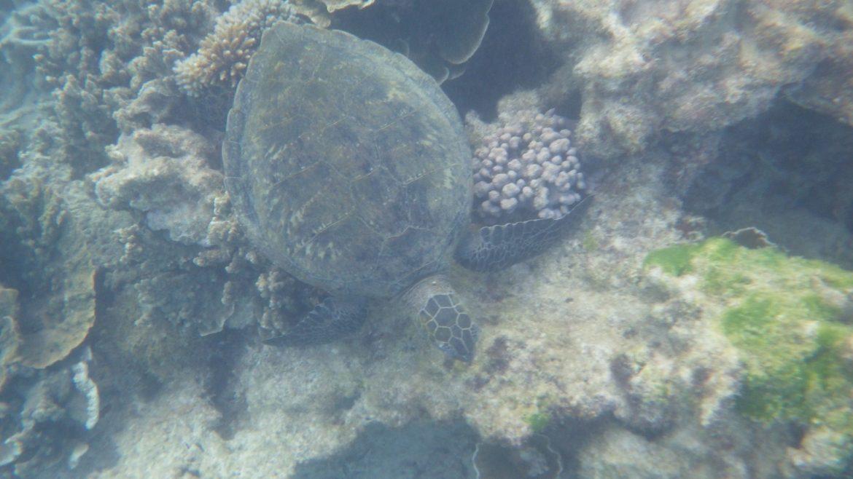 Zeeschildpad Ningaloo Reef