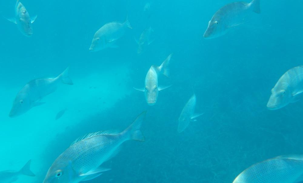 Snorkelen vanuit een glasbodemboot in Coral Bay