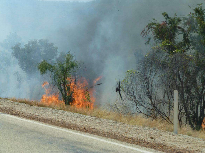 Brand langs de weg met haviken