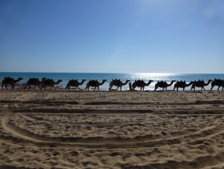 Kamelen op het strand