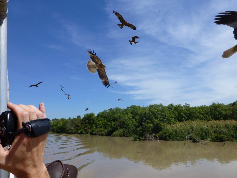 De roofvogels scheren voorbij om de laatste restjes - die de lucht in worden gegooid - op te snoepen.