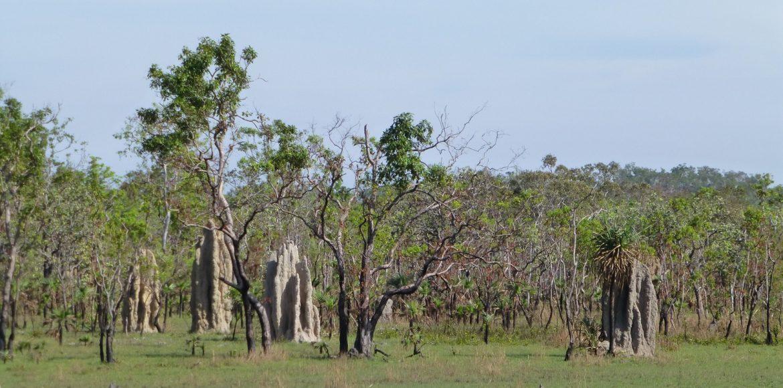 Termietenheuvels in het Northern Territory