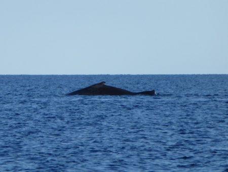 Walvis spotten vanaf de kust